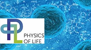 Vorschau für das Forschungsprojekt: Cluster of Excellence Physik des Lebens (PoL)  – Die dynamische Organisation lebender Materie